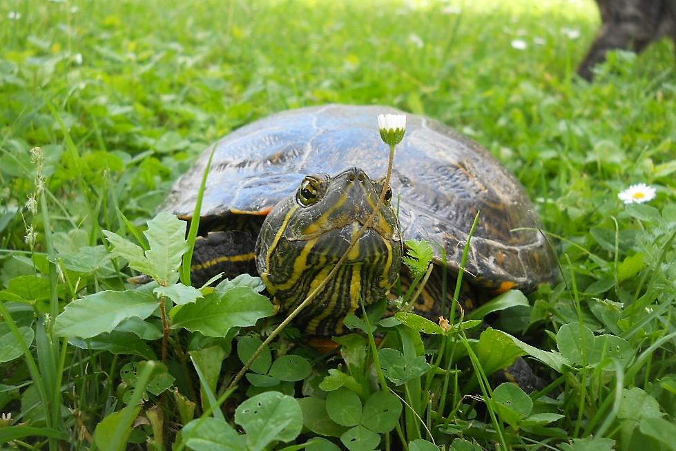 L oasi faunistica agriturismo la badia for Laghetto tartarughe inverno
